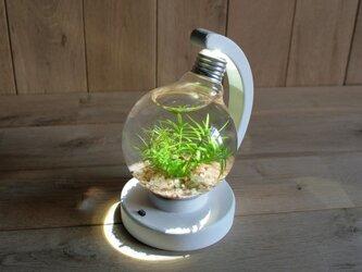 bulb terrarium ball whiteの画像
