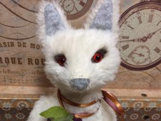 白狐の画像