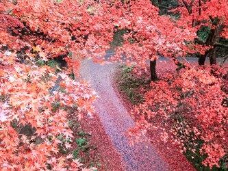 赤い参道の画像