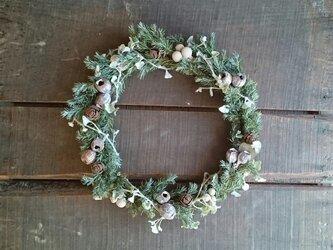 ドライグリーンと実物のクリスマスリースの画像