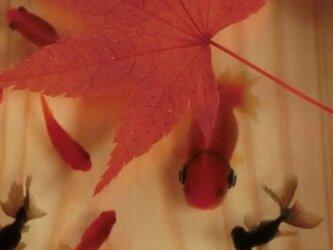 アクリル 桧 アート  「楽/もみじ」こだわりの純日本製 ★ラッピング無料★ 3D金魚 漆の画像