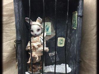 【YY様売約済み】閉鎖病棟の球体関節兎の画像