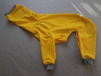 犬服 [受注生産]ウィペット用フルスーツ イエローの画像