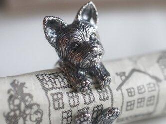 犬リング ヨークシャテリア ヨーキーの画像