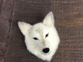 ウールの白い狼ブローチ  再出品の画像