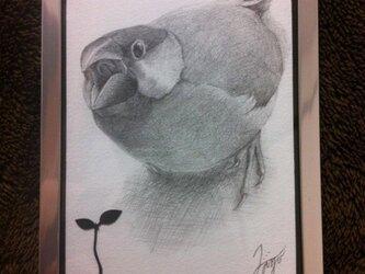 文鳥 - cinnamon -の画像