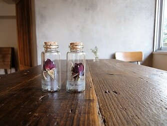 【展示のみ】植物標本 Botanical Collection■No.R-12 バラ ファンファールの画像