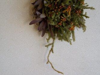ヒカゲカズラのしめ縄飾りの画像