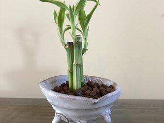 さざえ 陶器 茶白小鉢の画像