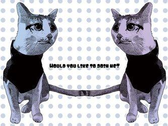 茶白猫のポストカード2枚セットの画像