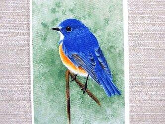 小鳥と子猫のポストカード2枚。の画像
