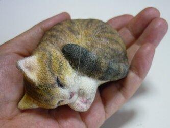 再出品 手乗り猫  アンモニャイト キジトラ猫さん2 座布団付の画像