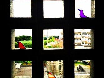 鳥 ②の画像