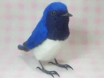 羊毛フェルト リアルサイズ♪ オオルリ 大瑠璃 野鳥の画像