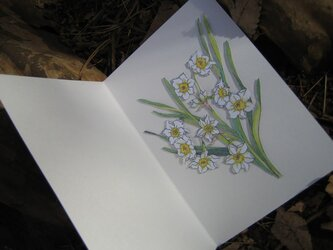 フリーメッセージ◇A5白色カード 【冬白色】日本水仙 1枚の画像
