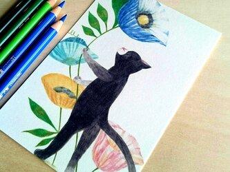 黒猫とポピーの画像