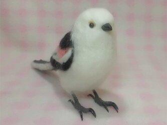 羊毛フェルト リアルサイズ♪ シマエナガ 野鳥の画像