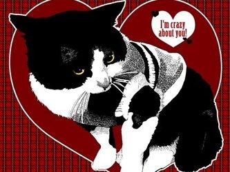 はちわれ猫のポストカード2枚種セット②の画像