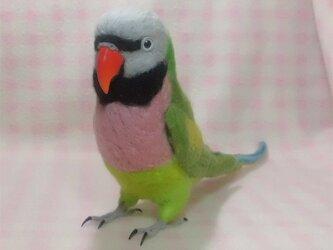 羊毛フェルト リアルサイズ♪ ダルマインコ Red- breasted Parakeetの画像