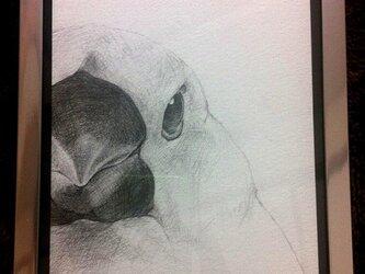 文鳥 - white -の画像