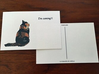 今行きま~す猫*2枚組の画像