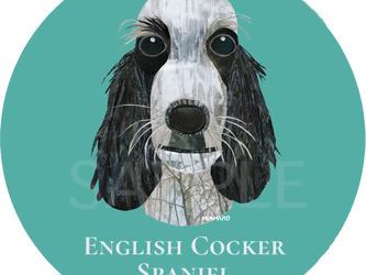 イングリッシュ コッカー スパニエル/ブルーローン《犬種名ステッカー/小型犬》の画像