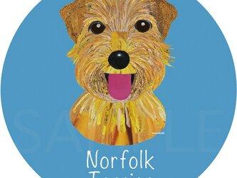 ノーフォーク テリア《犬種名ステッカー/小型犬》の画像