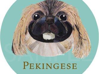 ペキニーズ/フォーン2《犬種名ステッカー/小型犬》の画像