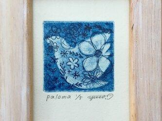 銅版画「Paloma」の画像