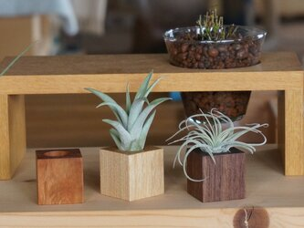 air-plants holder 1の画像