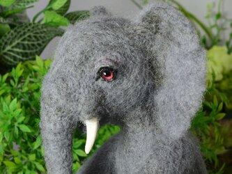 Papa elephant(アフリカ象)の画像