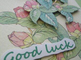 Goodluck カード◇2L白色カード 【春桃色 やぶつばき】 (1枚)の画像
