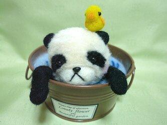 パンダとヒヨコの水浴びの画像