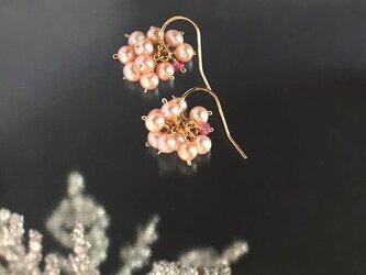 〈14kgf〉ピンク淡水パールのプチピアスの画像