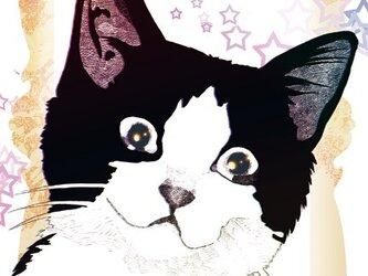 はちわれ猫のポストカード2枚種セット③の画像