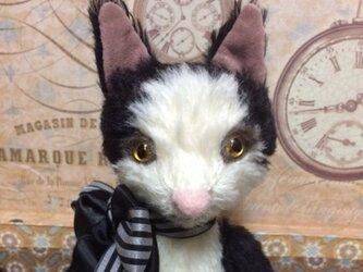 ハチワレ猫さん(白黒)の画像