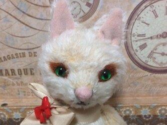 ベージュの猫さんの画像