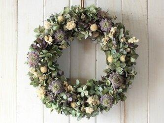 秋色紫陽花とミントフラワーのリースの画像