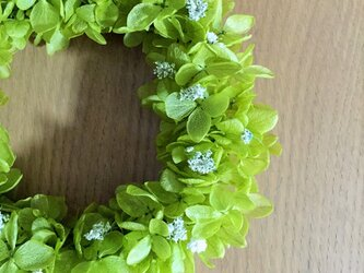 春告げリース 四つ葉のクローバーとシロツメクサの画像