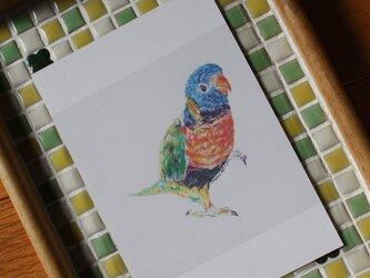 ゴシキセイガイインコのポストカード  ★1セット4 枚入りの画像