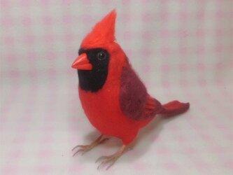 リアルサイズ♪ 猩々紅冠鳥(ショウジョウコウカンチョウ)台湾の野鳥   羊毛フェルトの画像