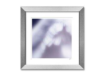 羽 wing 01の画像