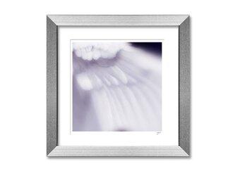 羽 wing 02の画像