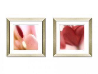 花 flower setの画像