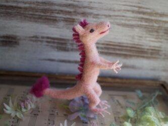 ミニピンクドラゴンの画像
