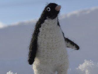 かしましいアデリーペンギンの画像