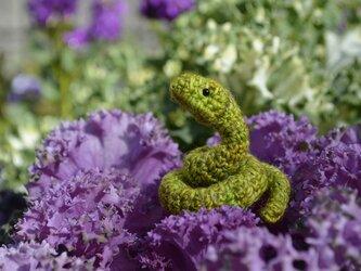 小さなヘビの画像