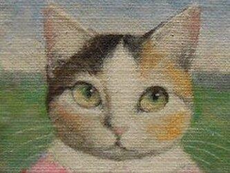 ミケ・ピンク3の画像