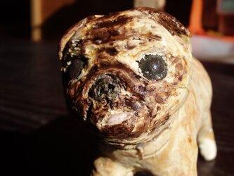 パグ犬の画像