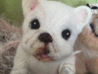 羊毛フェルト 犬 フレンチブルの画像
